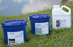 Prevent Algae Blooms In Your Pond