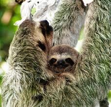 Mama Sloth Day