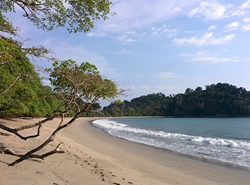 Palm Tree Costa Rica