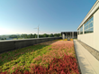 Prides Corner Farms, the exclusive representative for LiveRoof systems in New England, has supplied over 100 green roofs including this one at Heritage Aviation in South Burlington.