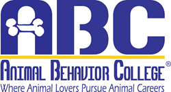 Animal behavior essay