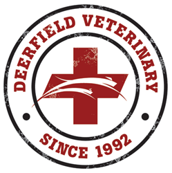 A Springfield veterinary hospital, Deerfield offers dog dental cleaning and surgical care.