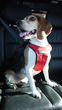 Clickit Sport Earns Highest Possible Five Star Crash Test Rating from Center for Pet Safety in Harness Certification Program