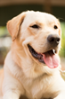 Pet Insurance Finder for 50 States Launched at Insurance Website...