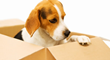 Los Angeles Movers Can Help Clients Who Have Pets Relocate