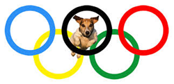 doggy-daycare-olympic-games
