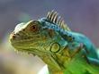 See Reptiles in the Rain Forest at San Antonio Aquarium