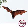 Thomas Pest Services On The Pros And Cons Of Bats