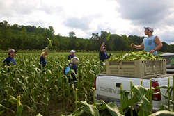 Omega Protein employees gleaned nearly three tons of fresh produce to benefit the Northern Neck Food Bank.