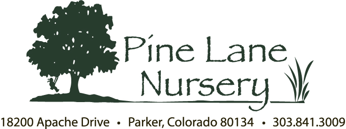 Pine Sawfly Outbreak Ravages Front Range Pine Lane