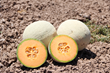 "HM.CLAUSE Boosts Availability of ""Best of Both Worlds"" FIJI Melon"