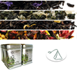Whole Leaf Tea Company, The Tea Spot, Launches Tea Sachet Samplers to...