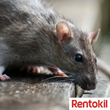 Rentokil offers Advice on Tackling Rodents after a One-month old Baby is attacked by Rats in Alexandra