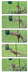The Perky-Pet Breakaway Squirrel-Be-Gone Wild Bird Feeder