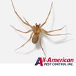 Nashville Pest Control Pros Offer Brown Recluse Prevention Tips