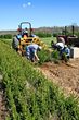 W.Va. State Tree Nursery Accepting Orders Sept. 2, 2014