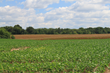 Multi-tract Auction to Offer Kentucky Cropland to the Public