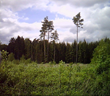 German Forest Service Uses Juniper Systems' Mesa Rugged Notepad to Manage Sustainable Forests
