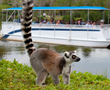 Floridians Get Closer with 50% Off Online Tickets at Naples Zoo