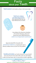Facts about teeth.