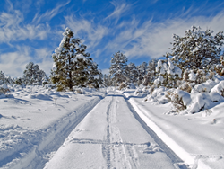 Snowy weather, cold winter, cold weather, freezing road, frozen road