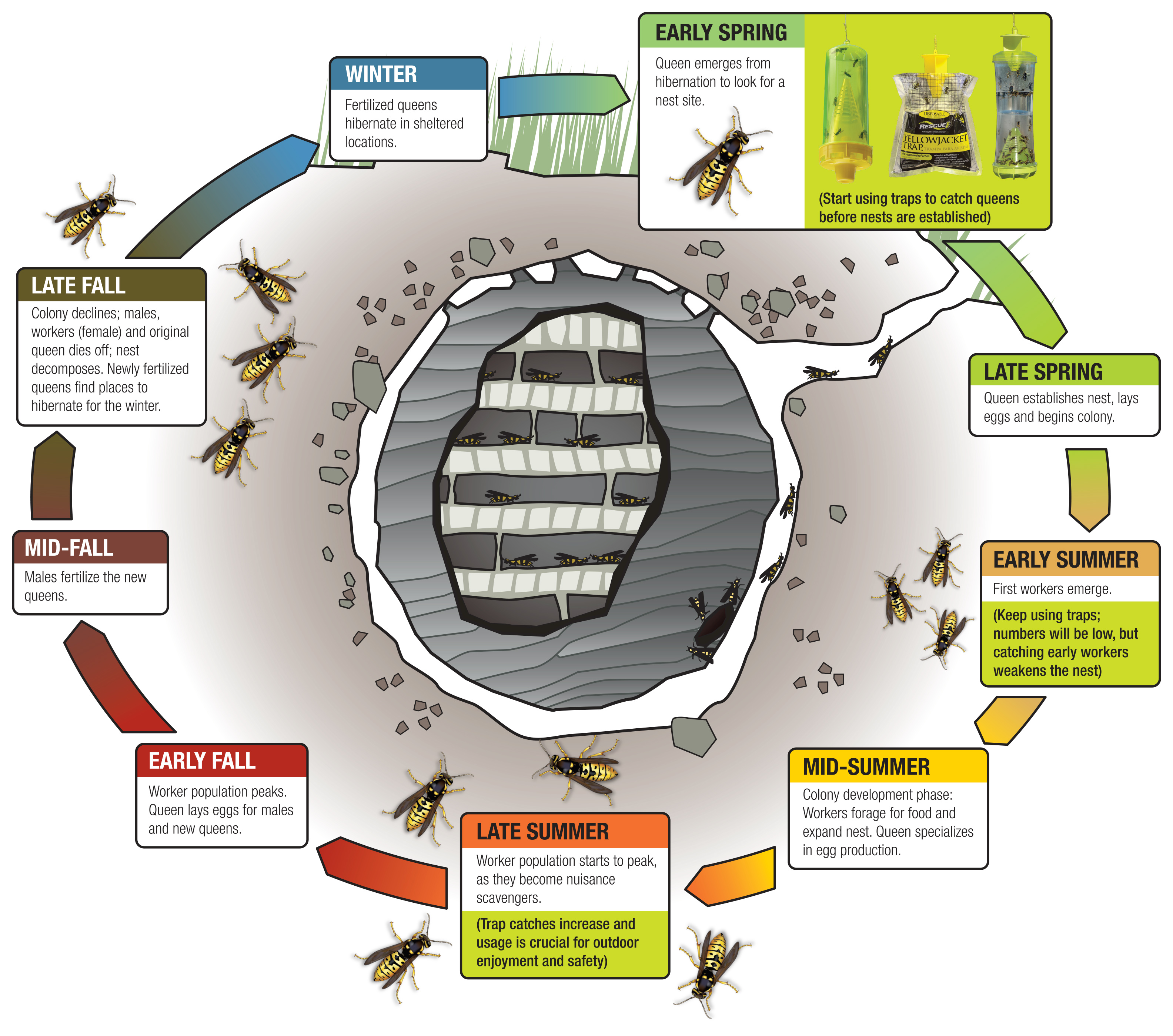 Yellow jackets live in the ground - Back To School Time Is Also Peak Season For Dangerous Yellowjackets Back To School Time Is Also Peak Season For Dangerous Yellowjackets