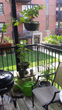 netting, patio, balcony, home, garden, cats, cat, safe, birds, squirrels, raccoon, separate