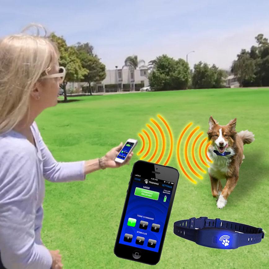 Smart Phone Electronic Dog Collar Has New Bluefang