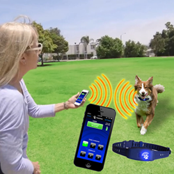 Bluefang - Smart Phone Controlled Bluetooth Dog Collar