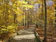 PigeonForge.com Shares Top 5 Fall Hikes in the Great Smoky Mountains
