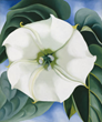 Sotheby's Autumn Auction of American Art to Feature:  Three Works on Offer from the Georgia O'Keeffe Museum,  Led by JIMSON WEED/WHITE FLOWER NO. 1
