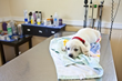 PetPlace.com Pet Expert Answers Whether Dogs and Cats Can Get Ebola