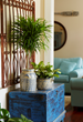 Indoor plants purify the air and add beauty to any home.