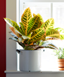Boost your well-being by adding indoor houseplants to your home or office.