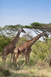 Naples Zoo Welcomes Giraffe Expert To Talk About Saving the Little...