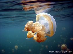 """Stuart Hoberman Awarded for """"Jellyfish"""" Photograph"""