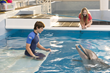 MilitaryOneClick Announces Dolphin Tale 2 Makes a Big Splash and Win a Colossal Prize Pack!