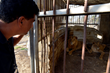 FOUR PAWS Animal Rescue Reaches Gaza Zoo