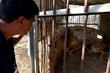 FOUR PAWS Animal Rescue Reaches Gaza Zoo