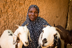 Santou Hamidou received two goats from Mercy Corps at the end of 2011. Emergency interventions such as these helped Santou and her village rebuild their homes and livestock herds after they were destroyed in a flood.