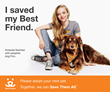 Celebrity Dog Finn and His Star 'Mom' Amanda Seyfried Join Best...