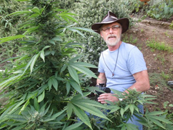 Mel Frank will lead a special elective course on growing marijuana at Oaksterdam University on September 27, 2014.
