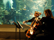 Marine-inspired Musical Performance at the South Carolina Aquarium