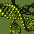 New Study Finds Link Between Genes and Mesothelioma Location, Reports...