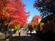 Reserve123 Welcomes the Start of Autumn with Various Fall Activities