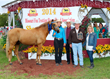 Southern Sunrise of 4P's Ranch, MFTHBA Hall of Fame Inductee