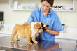 Marietta Vet Clinic, Julian Peckich DVM and Staff Have Announced the...