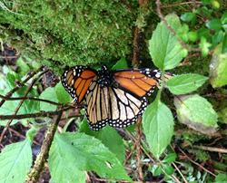Photo: Derek Goldman, Endangered Species Coalition