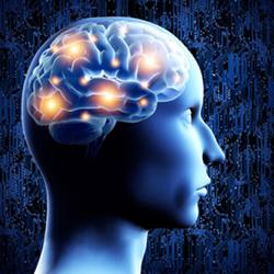 The Millionaire's Brain Review
