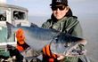 Copper River Coho Season Boasts a Large Healthy Harvest